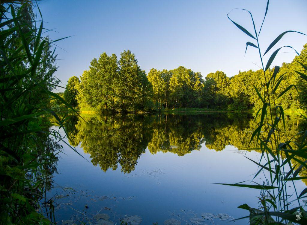 Фотография природа отражения