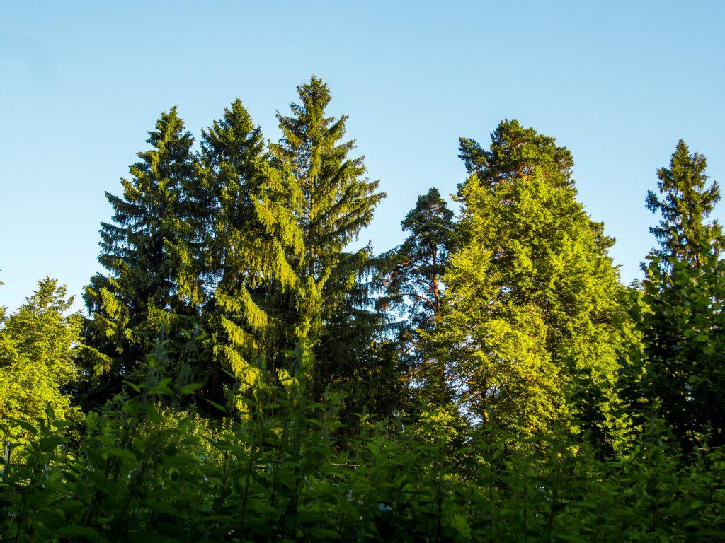 Фотография природа